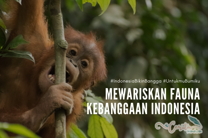 menjaga dan melindungi fauna indonesia